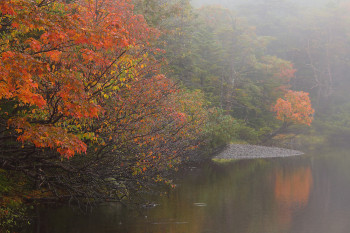 霧の七ツ池(9月21日撮影) Photo by Kenji Shimadate