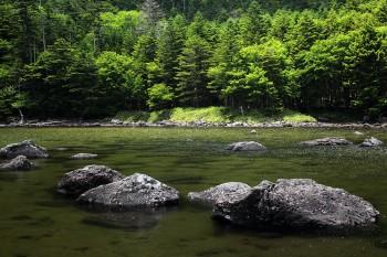 亀甲池(7月14日撮影) Photo by Kenji Shimadate