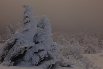 霧の中の樹氷(1月22日撮影) Photo by Kenji Shimadate