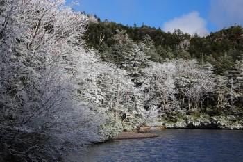霧氷の七ツ池(10月8日撮影) Photo by Kenji Shimadate