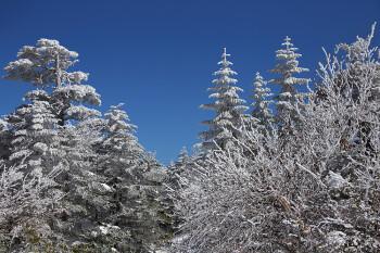 白い樹と青空(3月18日撮影) Photo by Kenji Shimadate