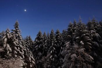 月明かりの森(12月27日撮影) Photo by Kenji Shimadate