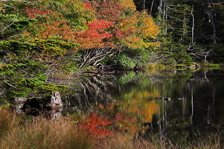始まった七ツ池の紅葉(9月) Photo by Kenji Shimadate