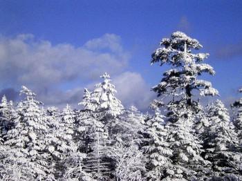 ヒュッテ前の樹氷