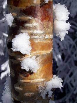 冬の小風景