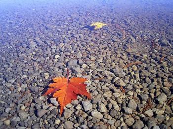 秋去りて (七ッ池)