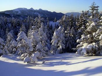 樹影と八ヶ岳 2月4日撮影