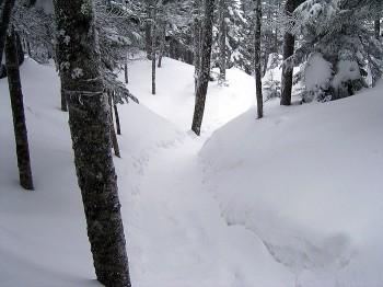樹林帯の登山道は溝状。降雪時や強風のあとはラッセルが必要