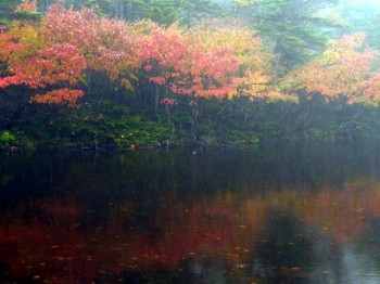 七ッ池の紅葉