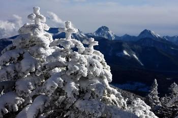 クリスマスツリーのような樹氷