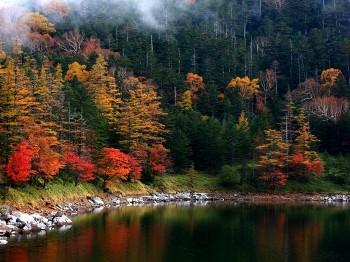 双子池の紅葉