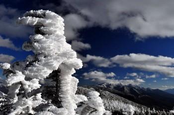 儚き雪景色