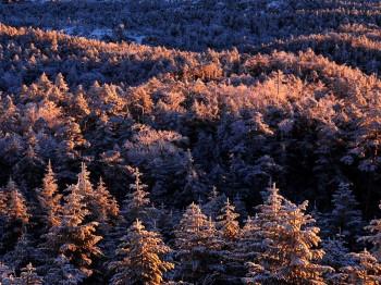 朝陽に染まる霧氷林