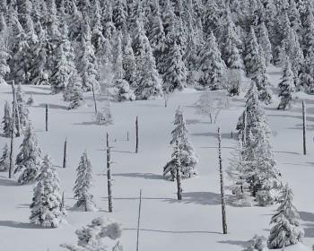 縞枯山の樹氷 3月2日撮影