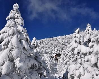 美しき樹氷 Photo by Kenji Shimadate