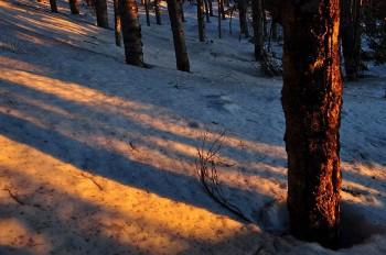 樹林内の朝焼け