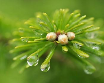 梅雨に潤う