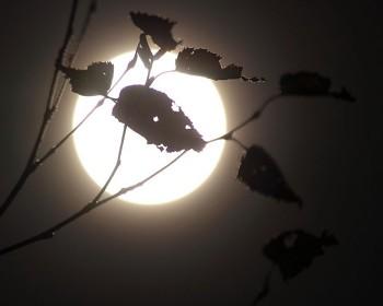 満月と枯れ葉
