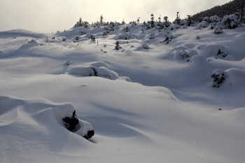 雪に覆われた坪庭