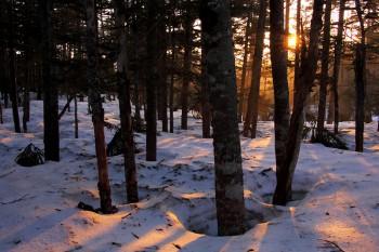 根明けの林内