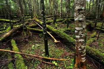 苔むす亀甲池の森