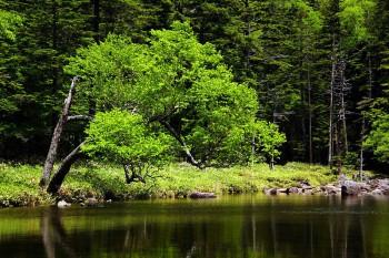 新緑の亀甲池