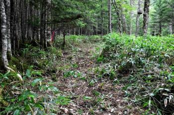 笹刈後の登山道