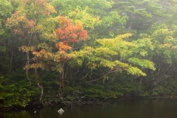 秋めく七ツ池