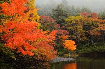 紅葉の七ツ池(10月1日撮影)