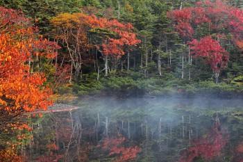 朝霧の七ツ池(10月9日撮影)