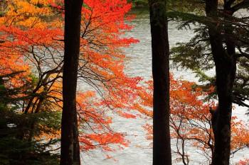 白駒池(10月18日撮影)