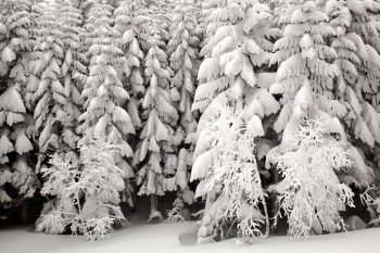 ヒュッテ付近の樹氷林