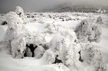 坪庭の樹氷