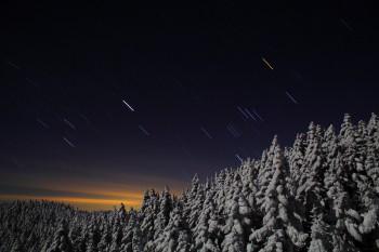 星降る月影の森