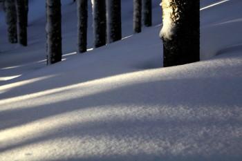 密かな林下