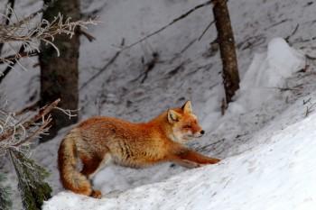 狐の背伸び