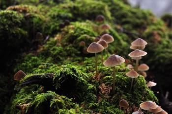 林下の小風景