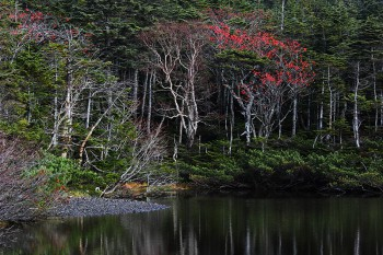 ナナカマドの赤い実 Photo by Kenji Shimadate