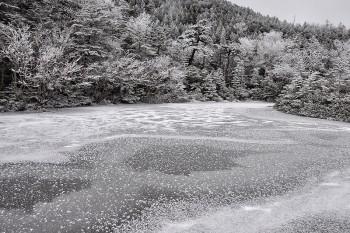 全面結氷の七ツ池霜の花 Photo by Kenji Shimadate