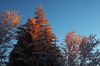 朝陽を受ける樹々 Photo by Kenji Shimadate