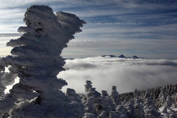 樹氷と雲海と八ヶ岳 Photo by Kenji Shimadate