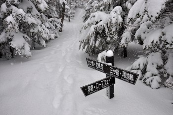 登山道の様子(4月6日撮影) Photo by Kenji Shimadate