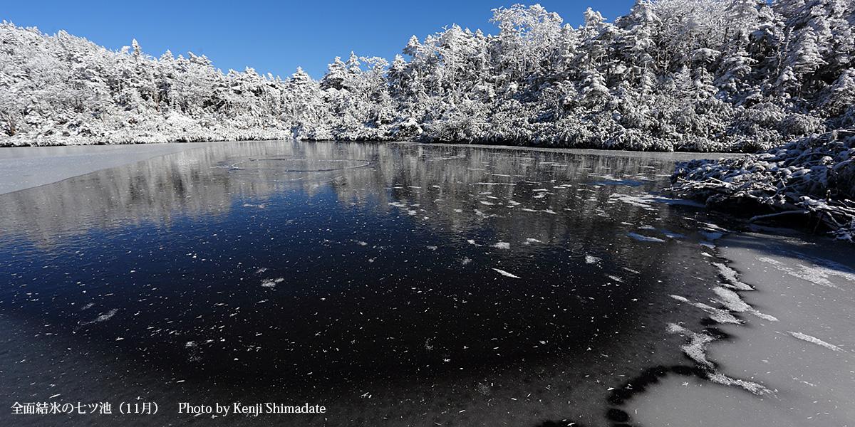 全面結氷の七ツ池(11月17日撮影)