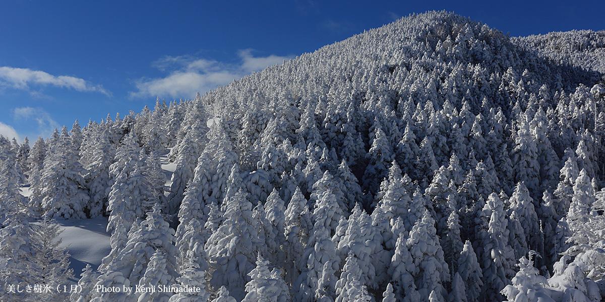 美しき樹氷