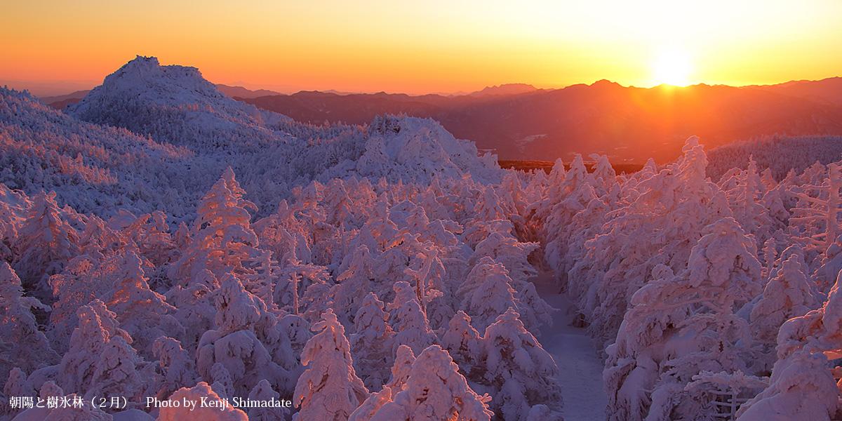 朝陽と樹氷林(2月)