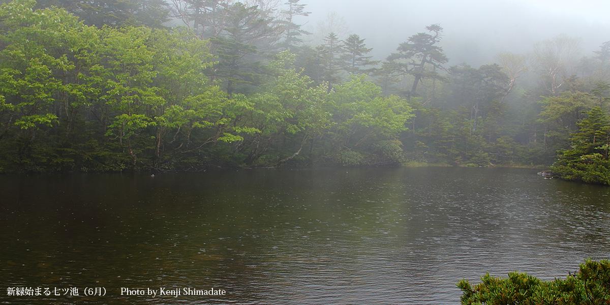 新緑始まる七ツ池(6月)Photo by Kenji Shimadate
