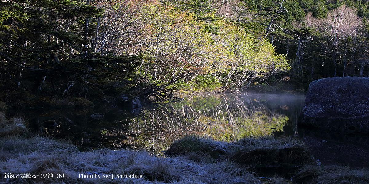 新緑と霜降る七ツ池(6月)Photo by Kenji Shimadate