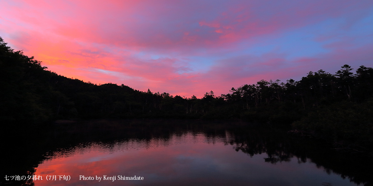 202107SD_七ツ池の夕暮れ(7月下旬)