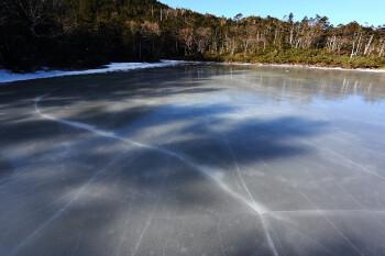 結氷の七ツ池(12月12日) Photo by Kenji Shimadate