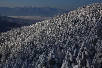 樹氷林と南アルプス(3月5日撮影) Photo by Kenji Shimadate